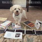 molly, the one sharp mama dog