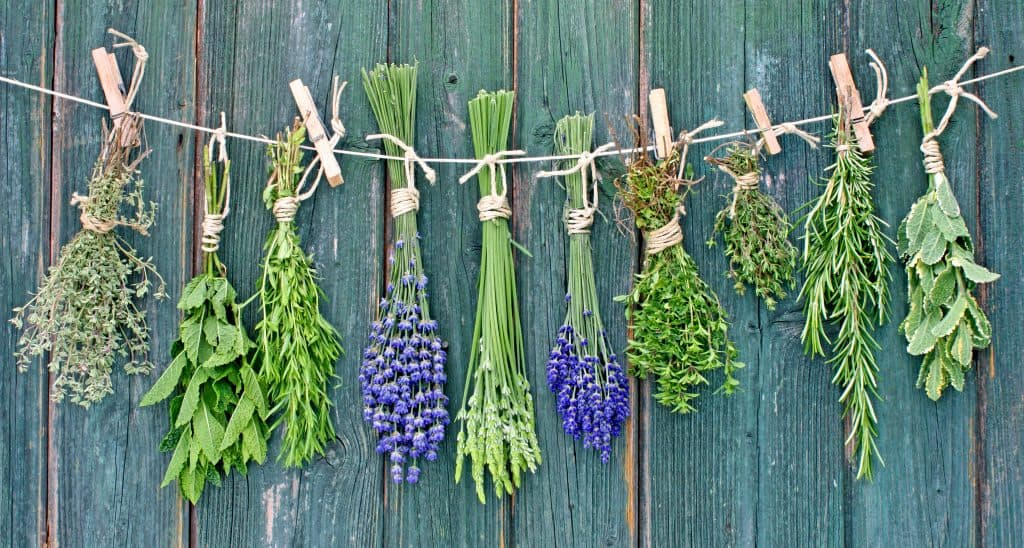 herbs hanging on a string.
