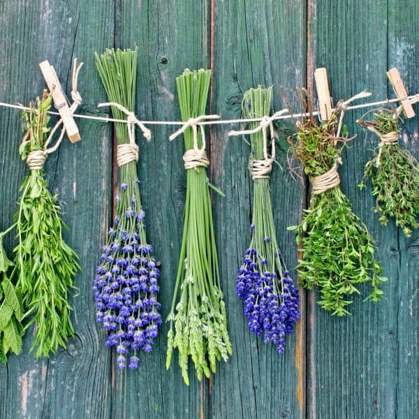 Herbs to Avoid When Pregnant